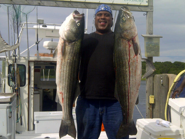 80 pounds of striper
